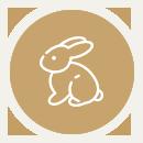 Strzyżenie królików Poznań