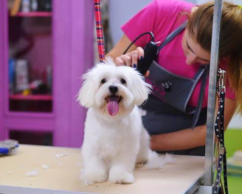 fryzjer dla psów Poznań